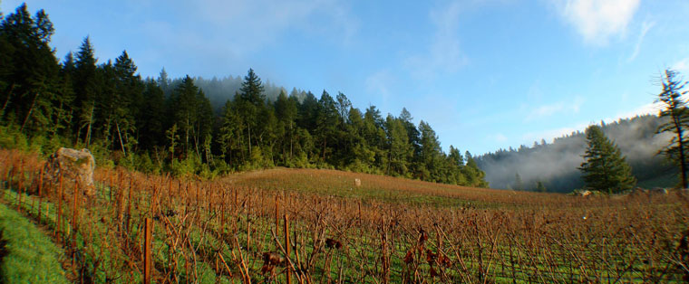 ark-vineyard-hundred-acre