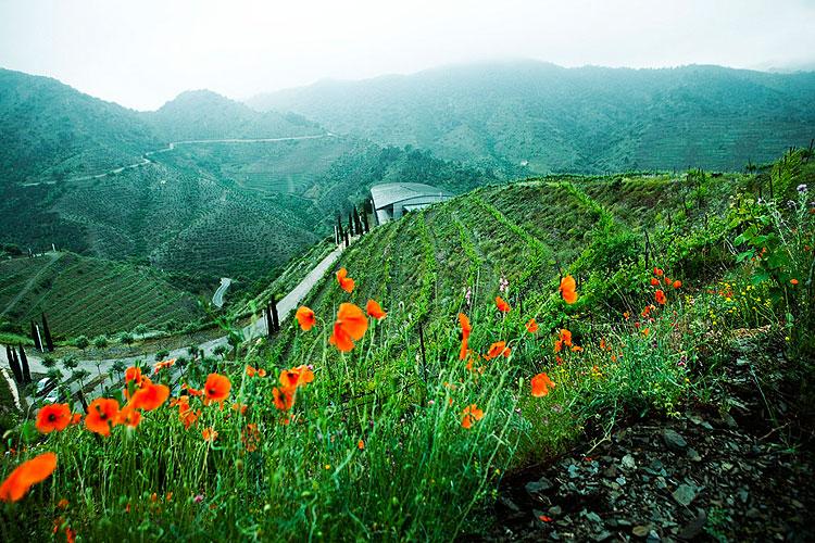 ferrer_bobet_respect_landscaping_1