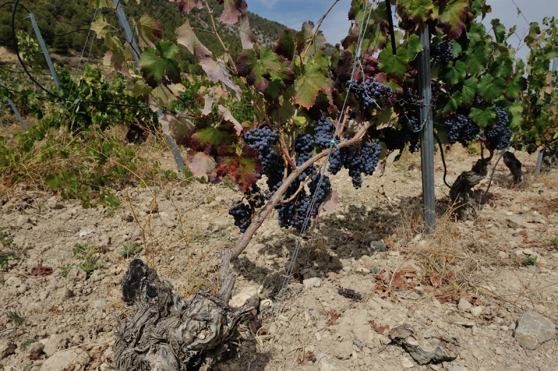 32538_bullas-wine-route-bodega-monastrell_21478101555_large