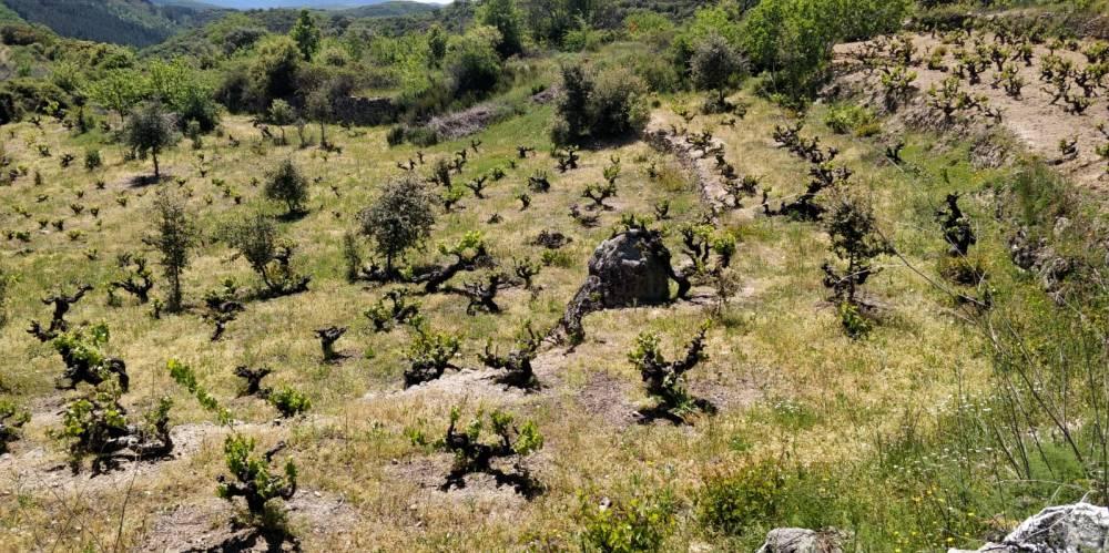 Viñas-Serranas
